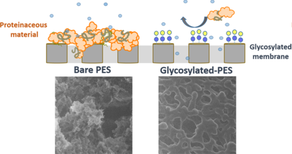 Enhanced Antifouling Properties of Carbohydrate Coated Poly(ether sulfone) Membranes
