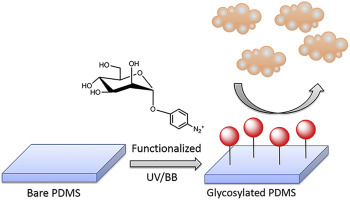 Stable hydrophilic poly(dimethylsiloxane) via glycan surface functionalization