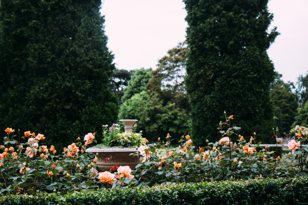 A Picture of the Gardens at St. Hugh's