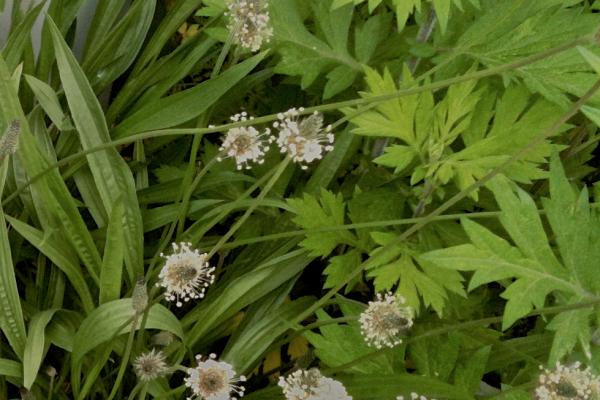 Healing Plants Walk