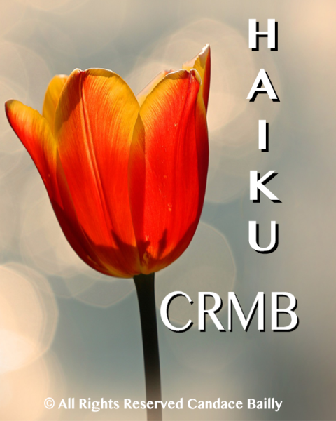 CRMB Haiku
