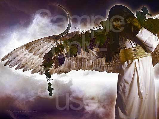 Harvest angel, vine of grapes, Revelation, prophecy