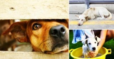 Holanda se torna o 1º país sem cães abandonados – e sem sacrificar nenhum animal
