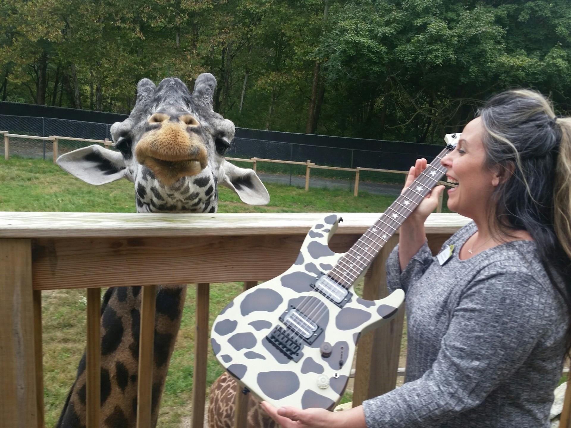 murphy, giraffe, lehigh valley zoo, guitar