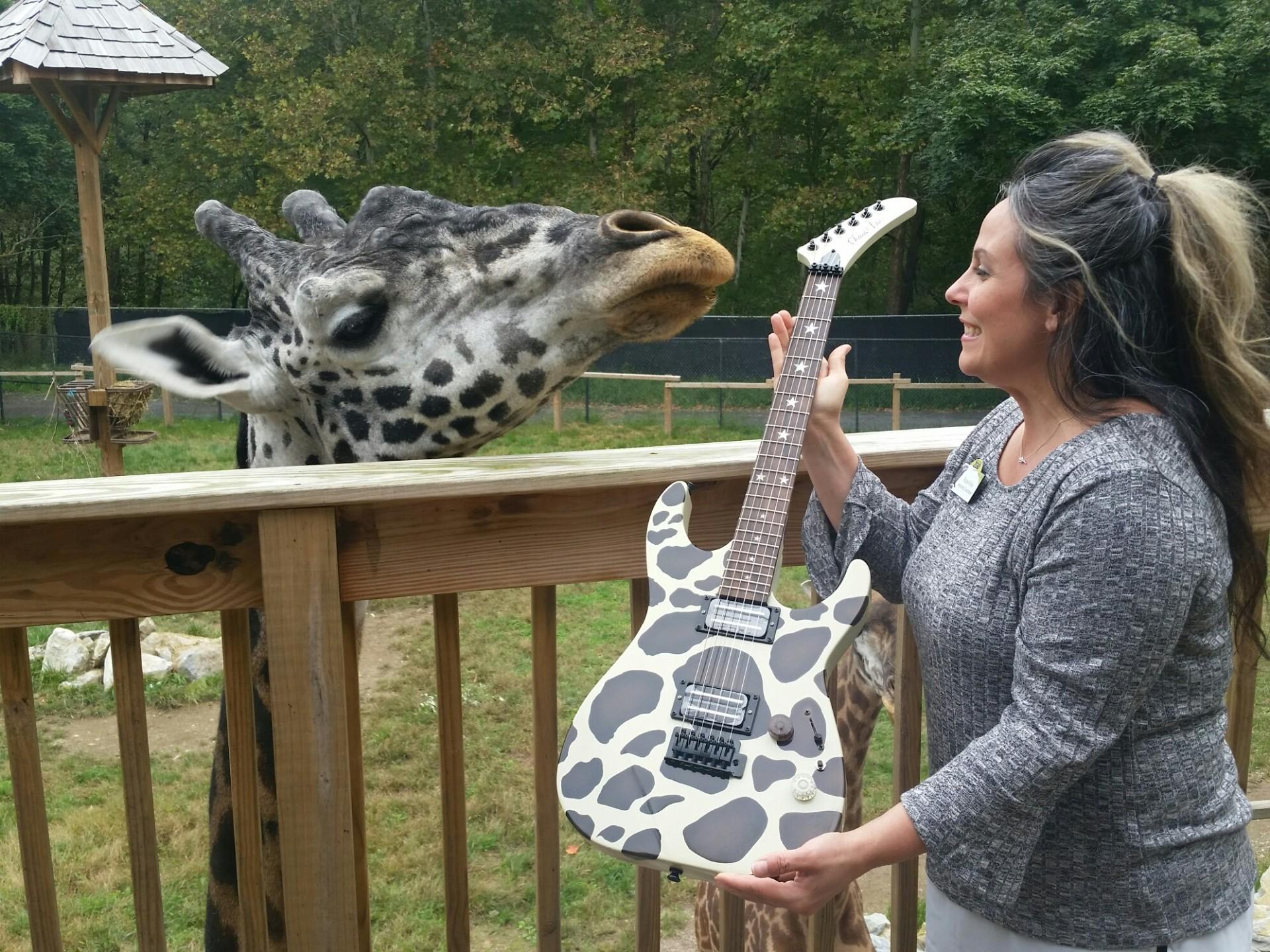 lehigh valley zoo, giraffe, guitar, chaos guitars, chaos inc