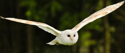 Owl handling experience