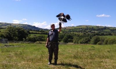 Falconry handling experience