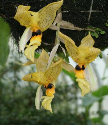 Орхидеите през лятото
