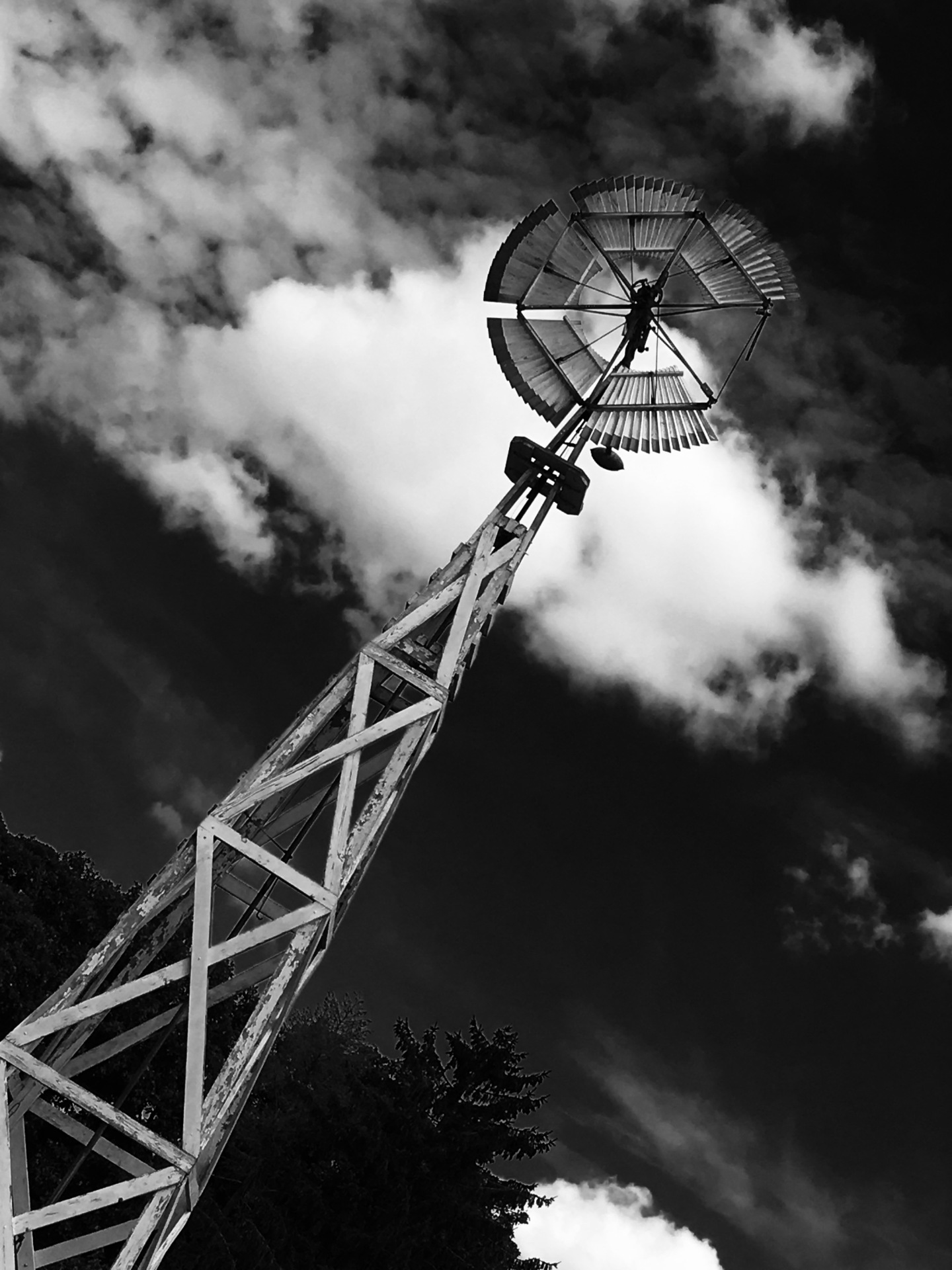 Winds of Change, Digital Still-Life Photography by Artist Mindy Lichter. MLICHTER fINE ART dESIGN