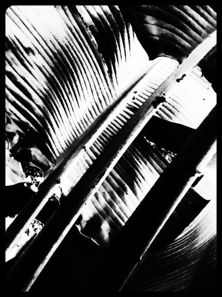 Fronds, Digital Still-Life Photography by Artist Mindy Lichter. MLICHTER fINE ART dESIGN