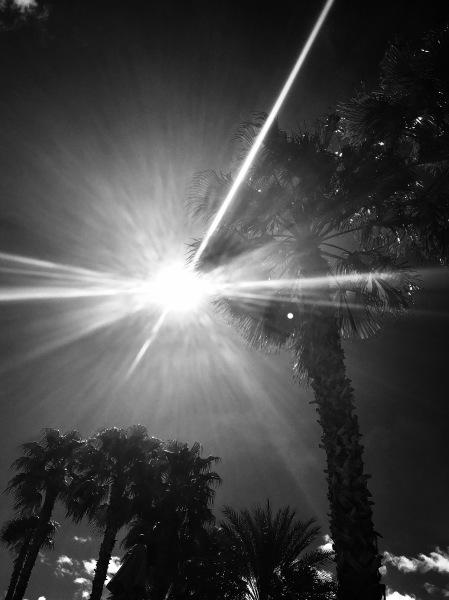 Light and Hesitation, Digital Still-Life Photography by Artist Mindy Lichter. MLICHTER fINE ART dESIGN