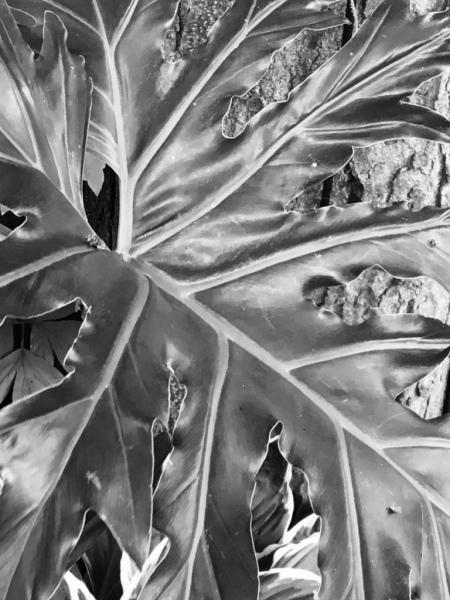 Philo, Digital Still-Life Photography by Artist Mindy Lichter. MLICHTER fINE ART dESIGN