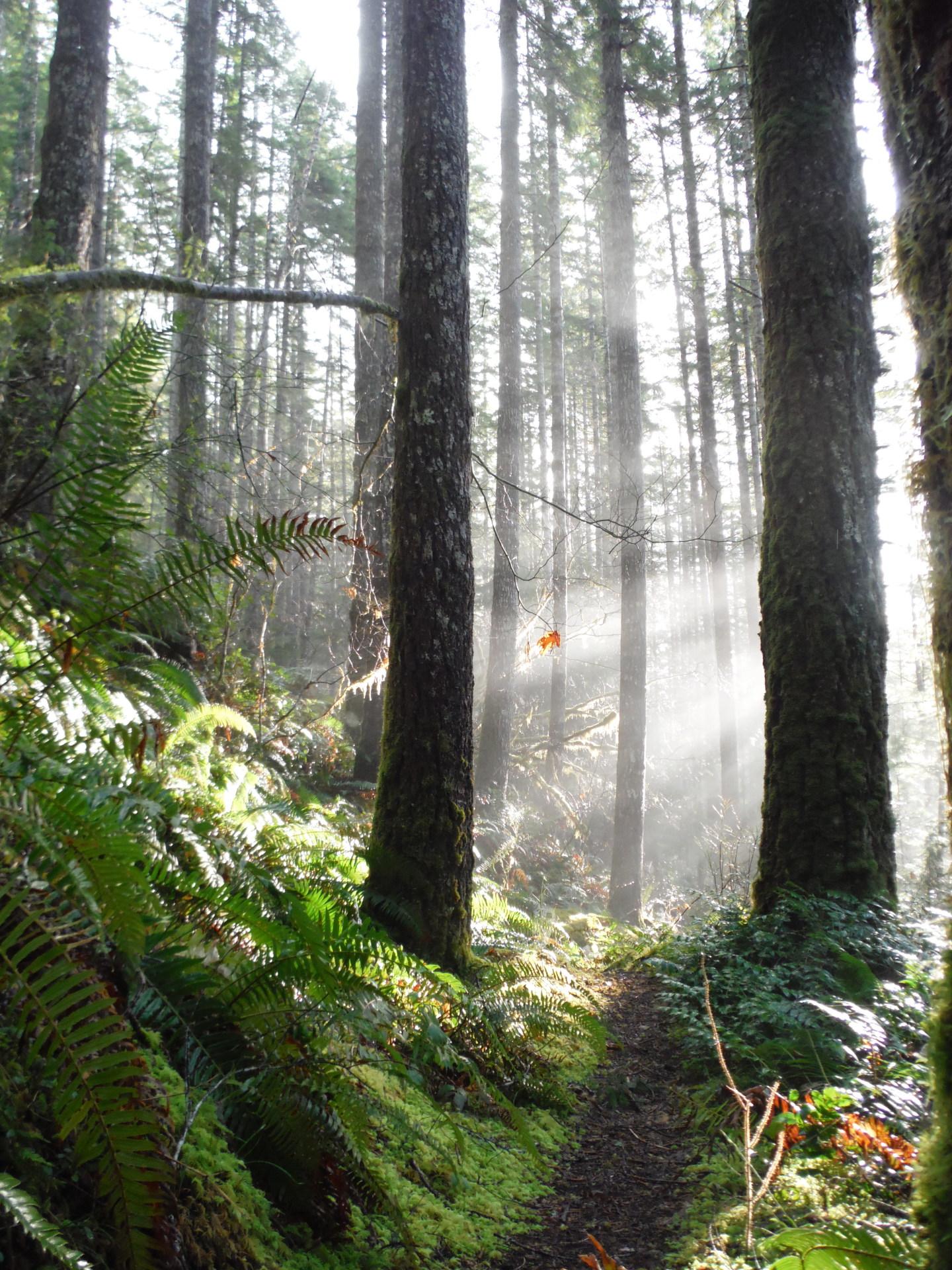 Hiking Olympic rain forest, olympic peninsula