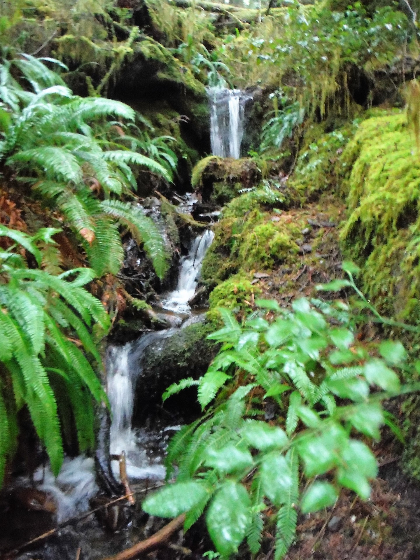 Olympic rain forest waterfall