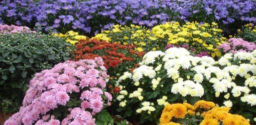 Autumn Favorite Plants