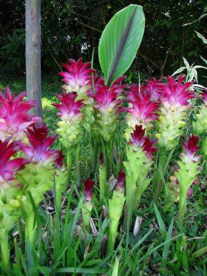 Advantages of the Turmeric Plant