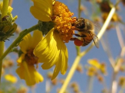 Natural Herbs for Allergy Relief