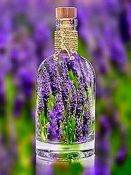 Heavenly Lavender