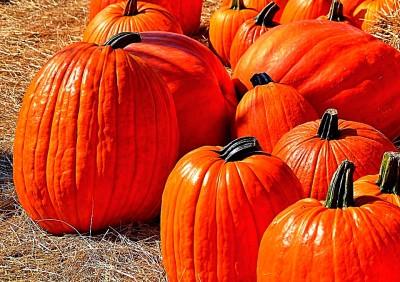 Tales of Pumpkins