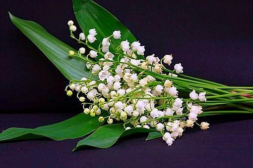 Fragrant, invasive, poisonous plants