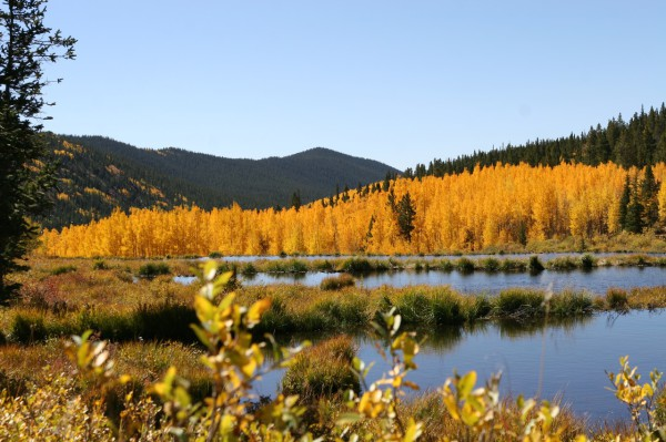 Beaver ponds and colorful aspen trees