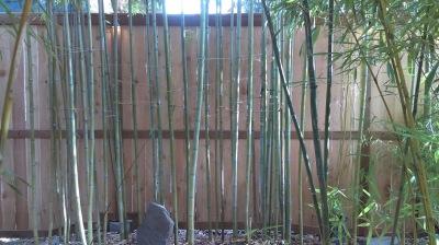 Cedar Fortress Style Fence