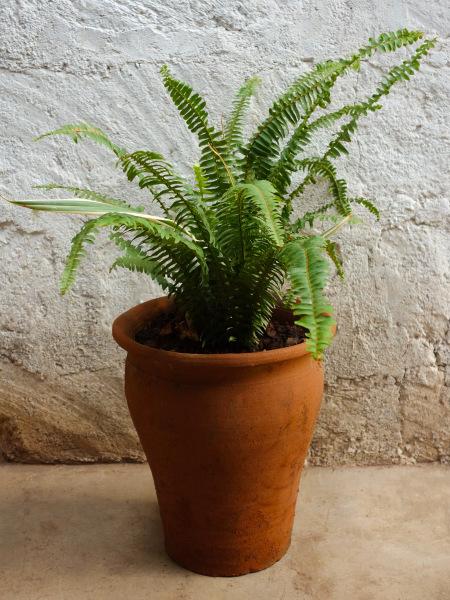 Fern Plant Medium