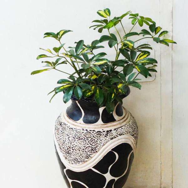 Muthira Plant Large