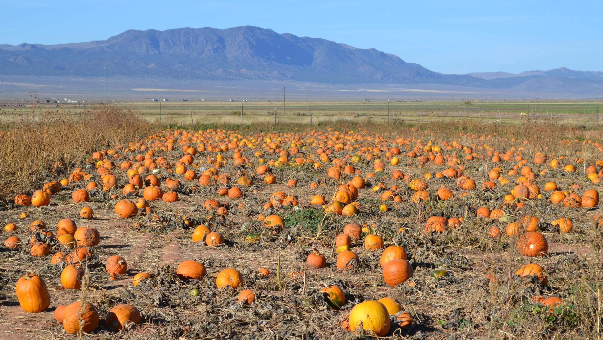 Utah Pumpkin Patch