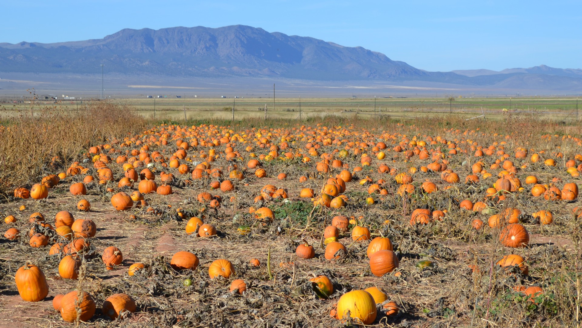 Utah Pumpkin Patch