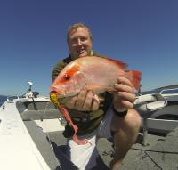 nannygai reef species fishing hervey bay