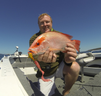 nannygai reef species fishing hervey bay