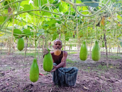 Gourd Cultivation