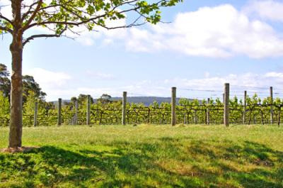 Local wines