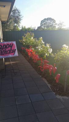Harley's Birthday Surprise