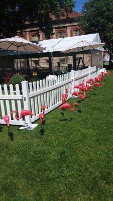 Adelaide University Flamingo Surprise