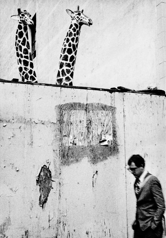 Street photography, Los Angeles Mon amour, Leica, black and white, 5th and Hill, giraffes,