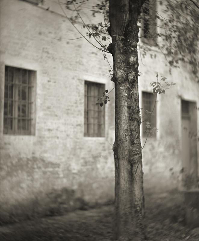 Italy, large format photography, sepia, analog photography, Italian landscapes, Italian cityscapes, Domenico Foschi, tree