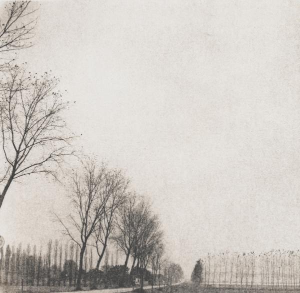Italy, large format photography, sepia, analog photography, Italian landscapes, Italian cityscapes, Domenico Foschi, Poplars, landscape, Italian landscape
