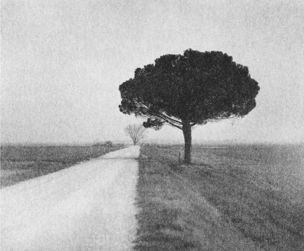 Italy, large format photography, sepia, analog photography, Italian landscapes, Italian cityscapes, Domenico Foschi, italian landscape, tree, pine on gravel road