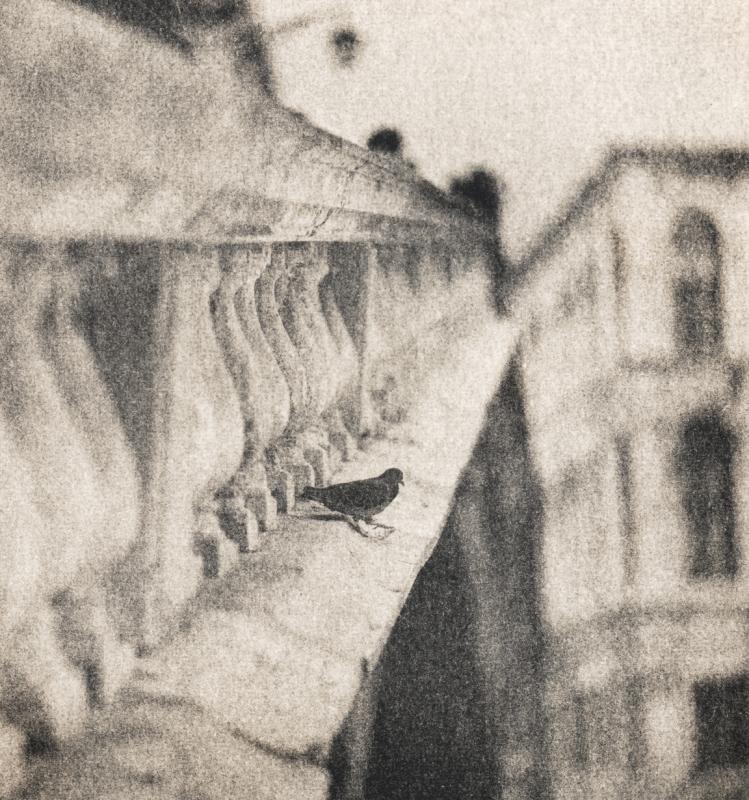 Italy, large format photography, sepia, analog photography, Italian landscapes, Italian cityscapes, Domenico Foschi, Venice, Venezia, bird