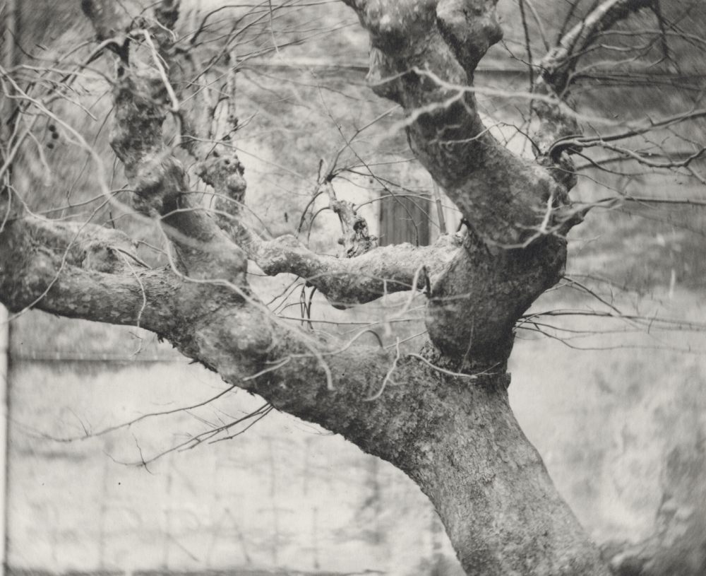 Italy, large format photography, sepia, analog photography, Italian landscapes, Italian cityscapes, Domenico Foschi, tree,