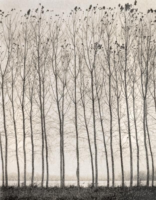 Italy, large format photography, sepia, analog photography, Italian landscapes, Italian cityscapes, Domenico Foschi, poplars, italian landscape