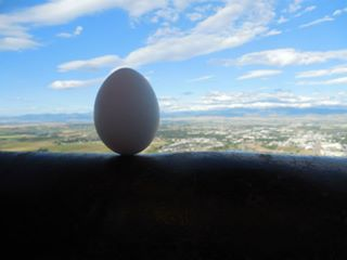 Taking egg balancing to new heights