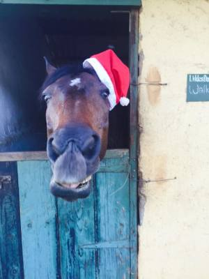 The 5 Horsey Christmas Rules