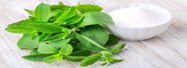 Stevia hoja y polvo
