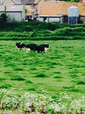 we saw a calf being born