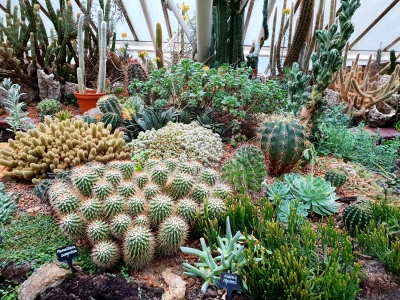 Discovering The Plural Of Cactus