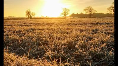 Frosty January Morning