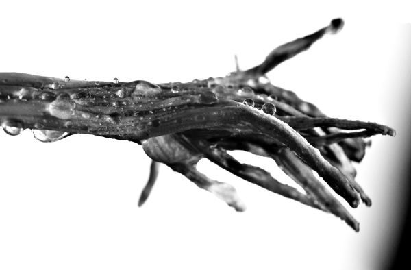 Zongorahangoló